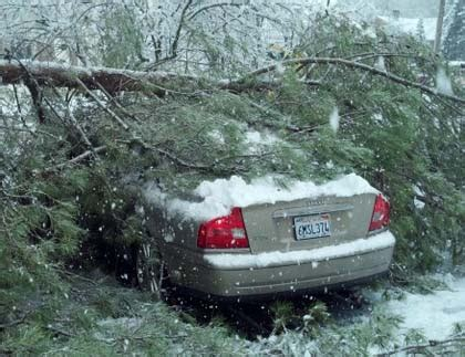 snow laden tree limb crashes   grass valley womans car cbs sacramento
