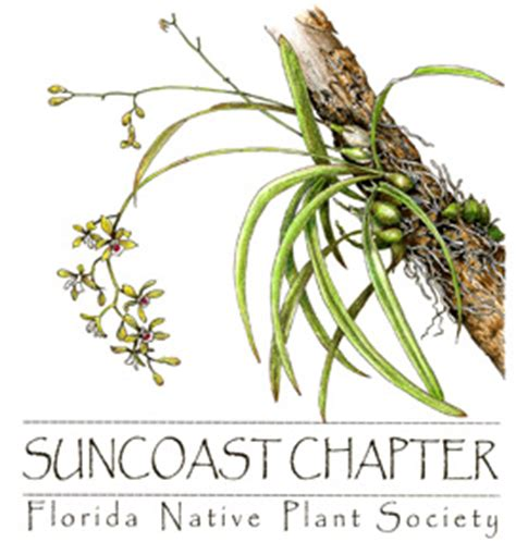 florida native plant society meetings suncoast