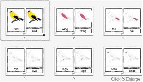 montessori materials flower nomenclature cards age 3 to 6 montessori materials parts of a bird nomenclature cards