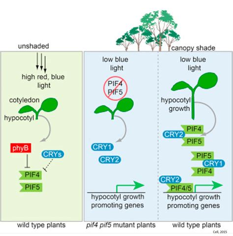 light and plant growth plant growth in limiting blue light science mission