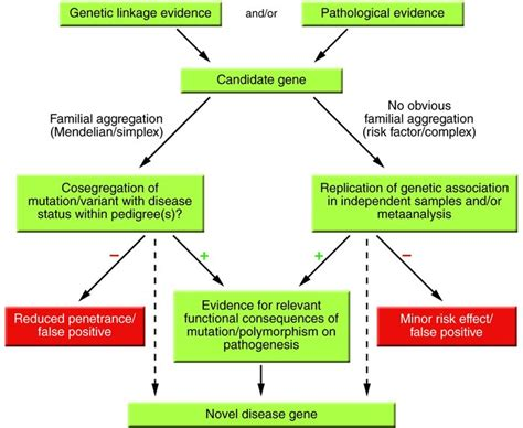 gene therapy flowchart genetic disorders flowchart file personal genomics gene