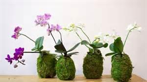 Do you know about string garden or kokedama blog nurserylive com