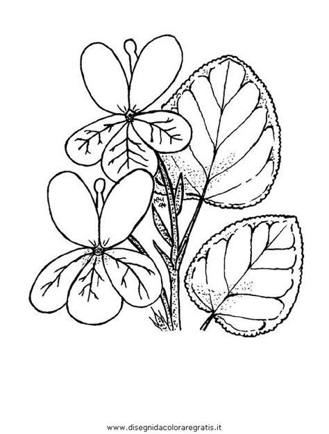 viola fiore disegno disegno viola violetta 2 categoria natura da colorare