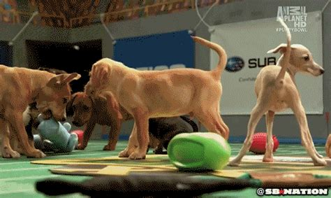 puppy bowl locker room puppy gif by sb nation find on giphy