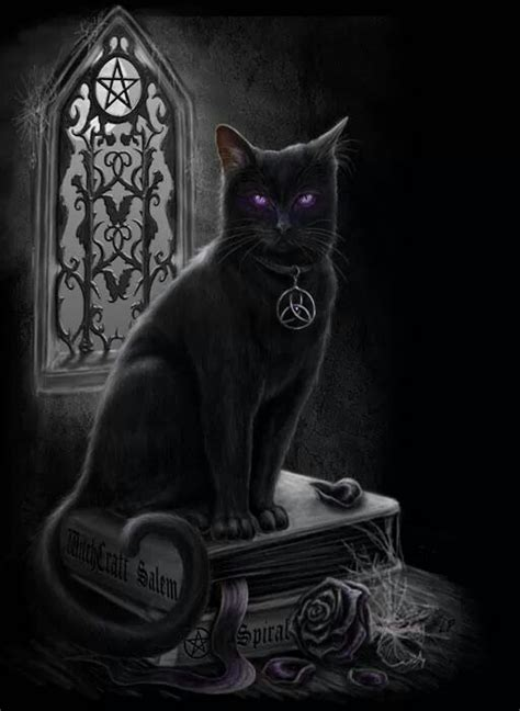 magic cat black magic cat black magic