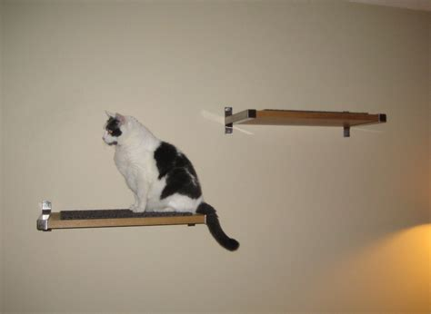 ikea cat shelves the adventures of kendall the cavalier