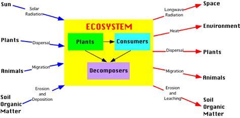 ecosystem energy flow diagram vudeevudee s geography ecosystem