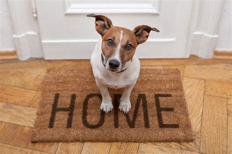 how to sell your pet friendly home
