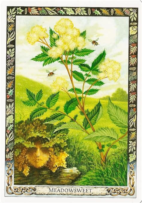 libro the druid plant oracle druid plant oracle meadowsweet casting