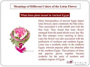Lotus Flower Color Meaning Meanings Of Different Colors Of The Lotus Flower