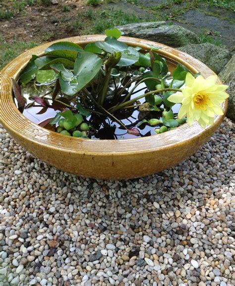small water garden gardens pinterest
