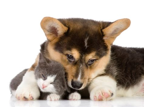 puppys and kittens caring for puppies and kittens
