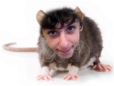what is a rug rat faze rug rugsfaceonstuff
