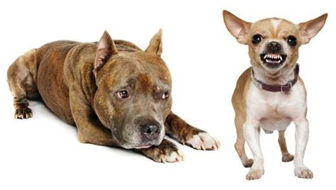what are the best dogs to protect your home breeds