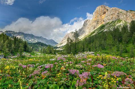 flowers   mountain meadow  julian alps zkbld flickr