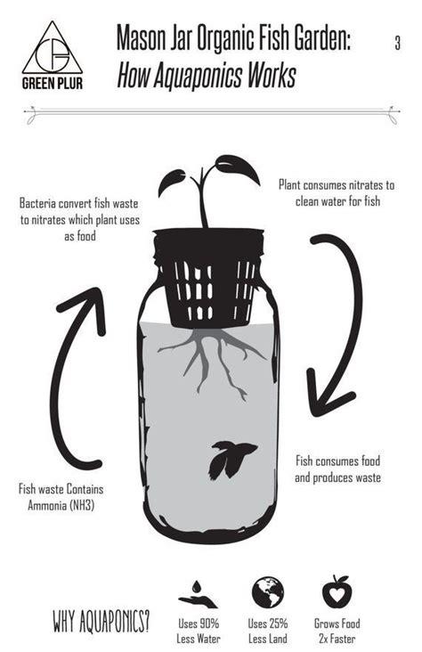 mason jar fish garden desktop aquaponics  sustainable