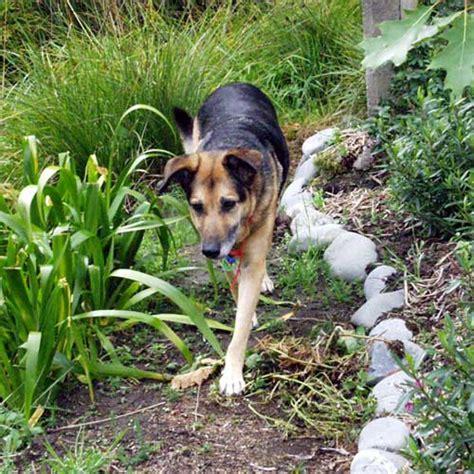 dog house garden garden designer dog