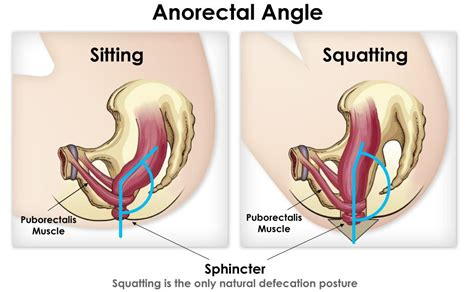 how to have comfortable anal do you sit or squat potty training for grownups how to
