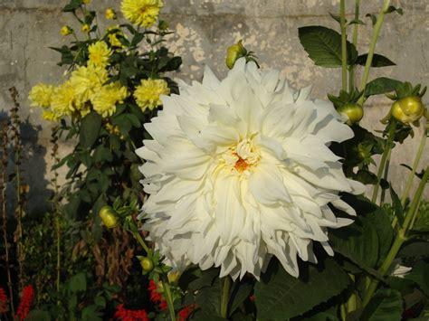 flowers photos 28 images photos of flowers photos of names of white flowers 28 desktop wallpaper