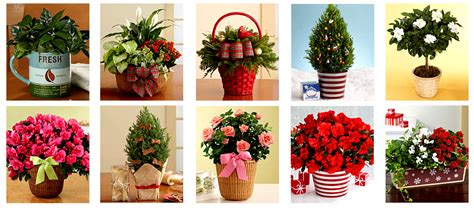 christmas plant gifts ideas