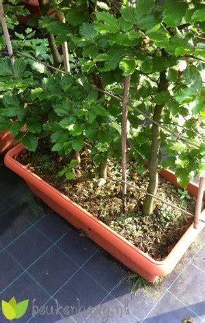 beukenhaag compleet groene beukenhaag kant en klaar 225 cm