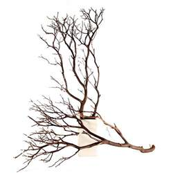 Wholesale Hydrangeas Manzanita Branches Natural 10 Quot Up To 96 Quot