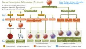 Jak2 Translocations In Hematological Malignancies Review Of The Literature by A D A M Ondemand Introduction To Hematological Malignancies