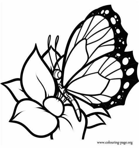 beautiful butterfly coloring pages to print coloring