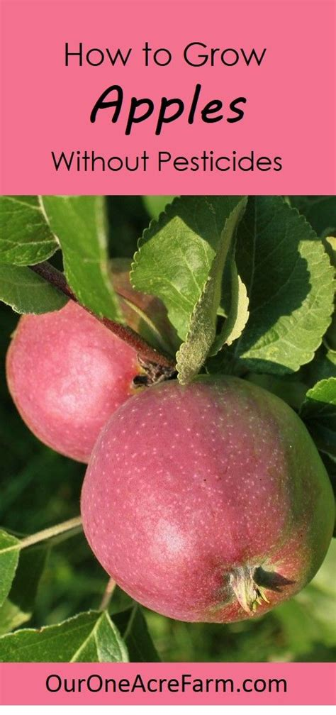 how to grow apples without pesticides apple plant flower bag and permaculture
