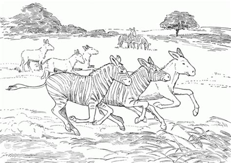 aardvark to zebra animals of africa coloring book books animals coloring page az coloring pages