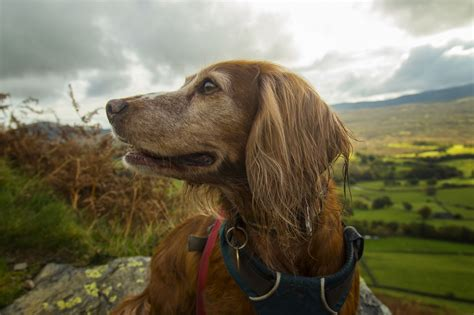 district dogs pet friendly cottages in the lake district
