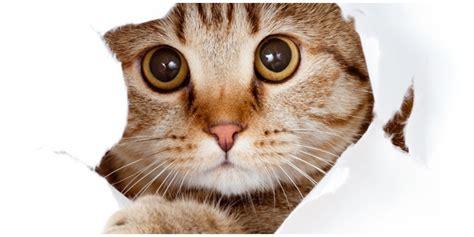 Kumis Kucing Remujung Bubuk 1 Kg tanaman obat merawat tanaman obat pemeliharaan tanaman kumis kucing vemale