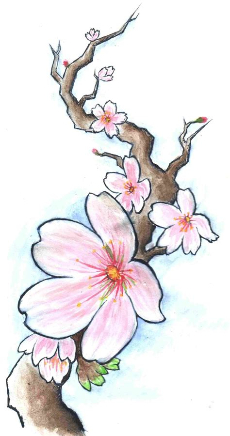 cherry blossom branch tattoo designs 36 best cherry blossom drawing idea images on