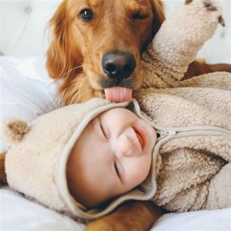 puppies with babies 10 pictures in you a sad day loldamn