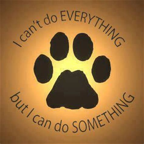 rescue quotes 17 best images about animal rescue quotes on cats adoption and volunteers