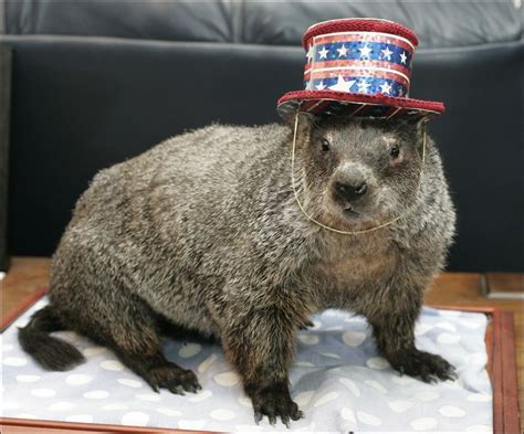 groundhog day accuracy prognosticator honored with late groundhog day