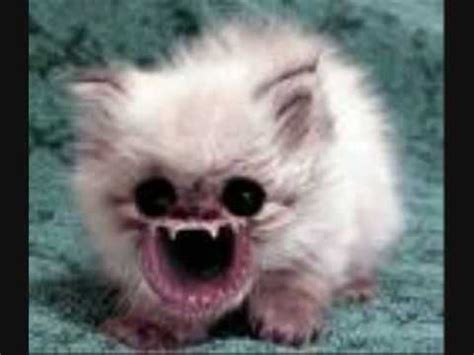 scary cat scary cats www pixshark images galleries with a bite