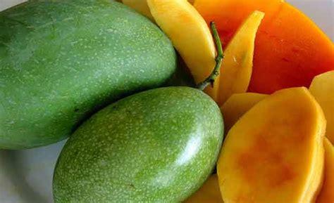 Bibit Mangga Arumanis 143 balai penyuluhan pertanian kedamean mangga mangifera