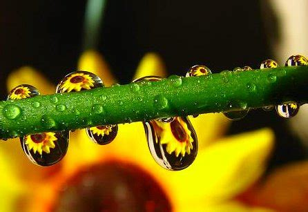 6 tips for successful macro photography