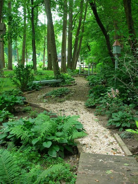 low maintenance woodland garden ideas photograph garden th