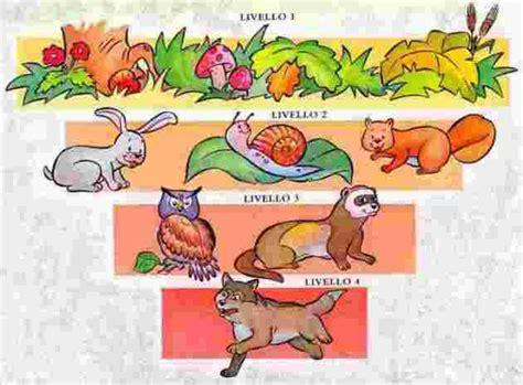la catena alimentare degli animali per i miei piccoli