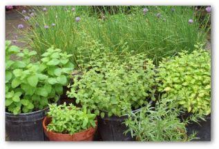 summer vegetable garden planning tips pictures  ideas