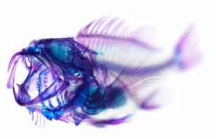 cool fish #fish #beautiful fish #transparent fish
