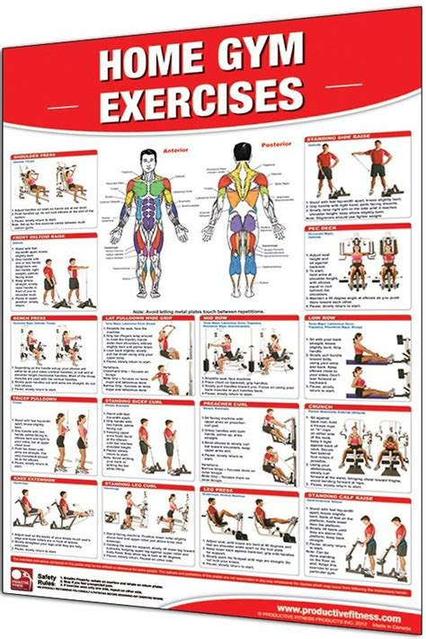 home gym workout plan this poster features 20 of the most common home gym