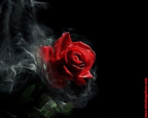 rosas goticas de amor imagui rosa enfuma 199 ada cemiterio das imagens