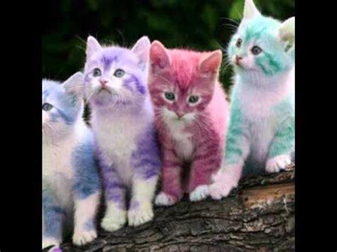 słodkie kotki youtube