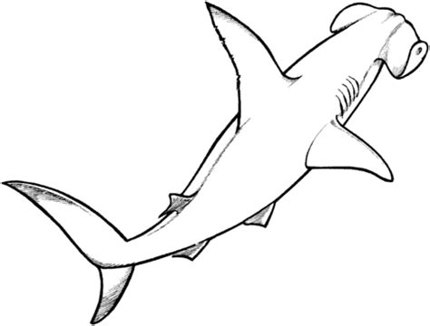 Coloring Page Of A Hammerhead Shark | hammerhead shark coloring page supercoloring com