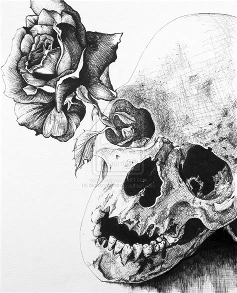 black rose and skull tattoo eletragesi black roses and skulls images