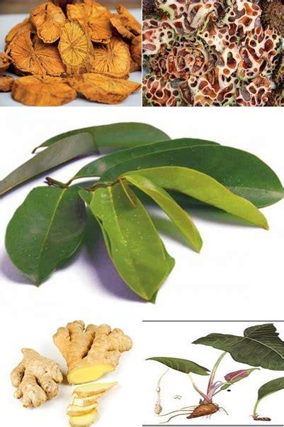 obat kanker  tumor  tanaman obat alami info