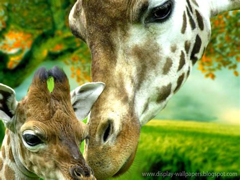 animation wall cute animals wallpaper